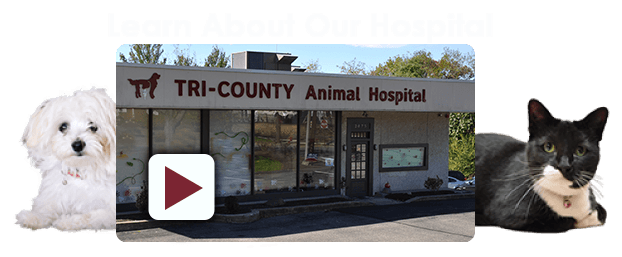 Learn About Our Animal Hospital