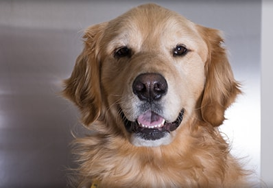 Tri-County Animal Hospital educational articles