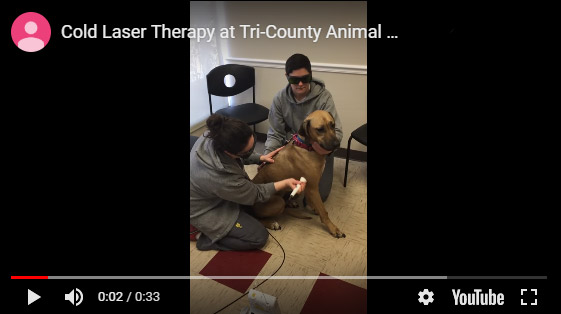 Tri-County Animal Hospital, video