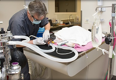 Digital veterinary radiology at Tri-County Animal Hospital